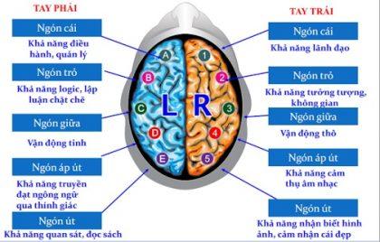 Mối liên hệ giữa vân tay và 5 thùy não