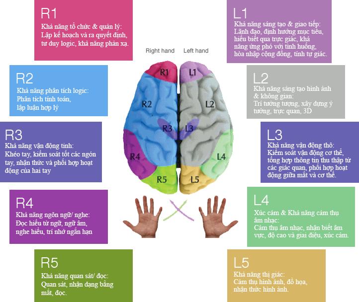 Chức năng của 10 thùy não