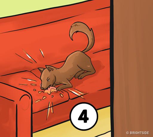 Tính cách con người - Dừng chú cún đang cắn ghế sofa